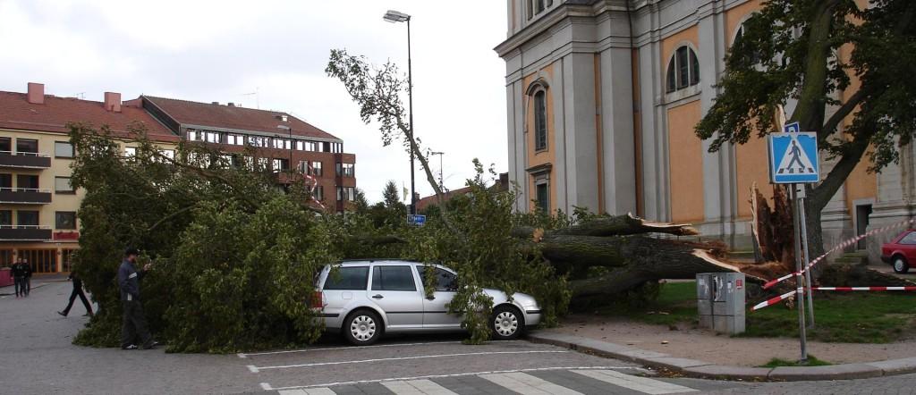 Minns ni trädraset vid Fredrikskyrkan?