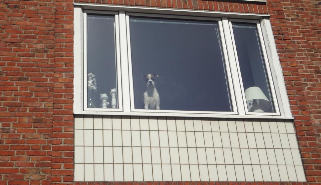 Hunden i fönstret