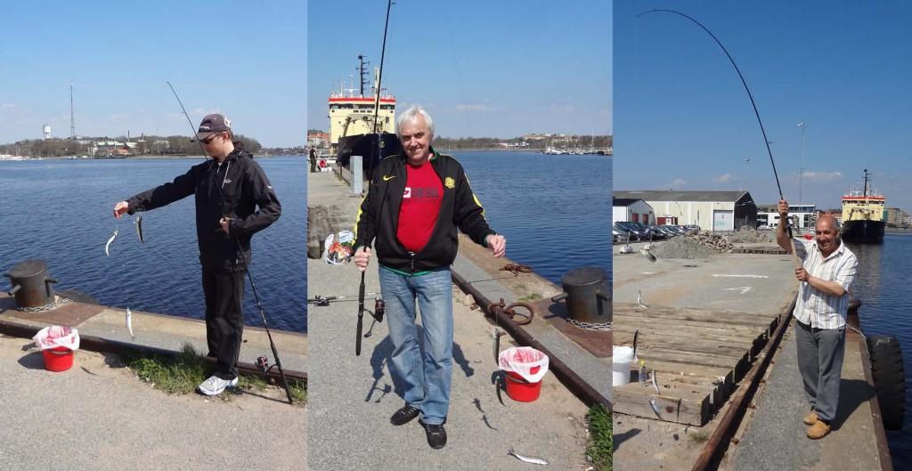 Sillfiske i hamnen
