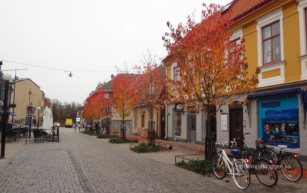 Höstfärger på Borgmästaregatan