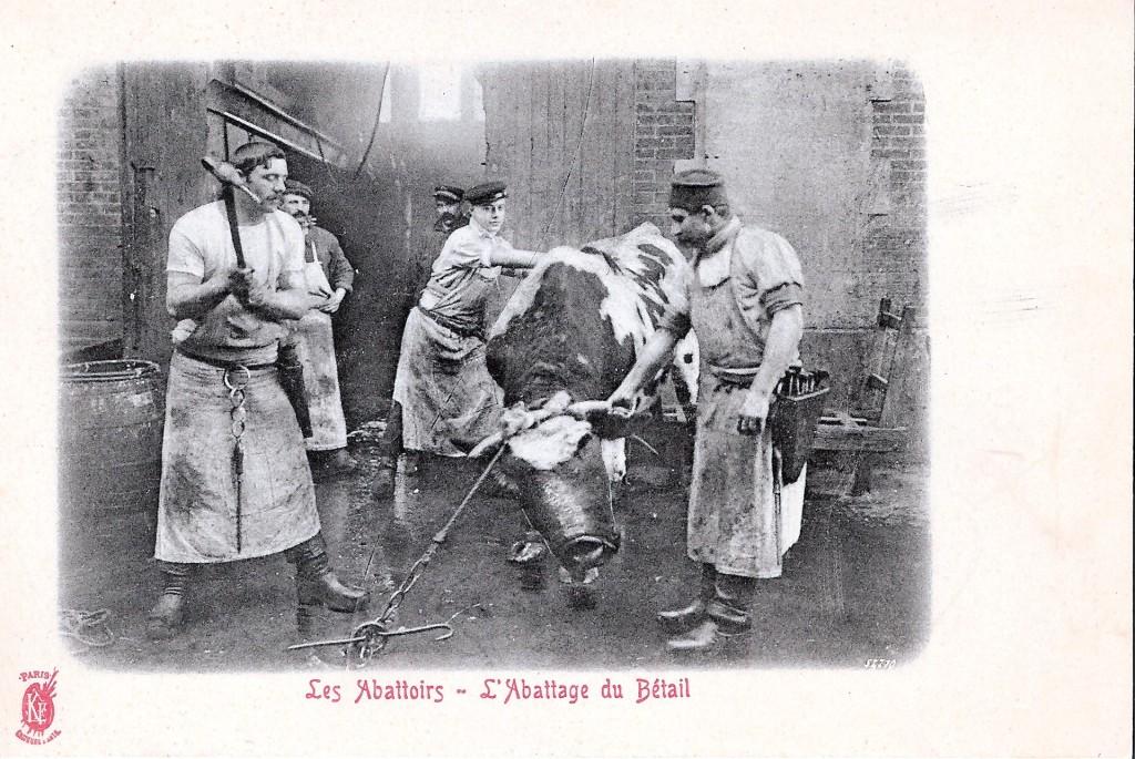 Så här påbörjades slakten av  nötkött i Paris omkring år 1900