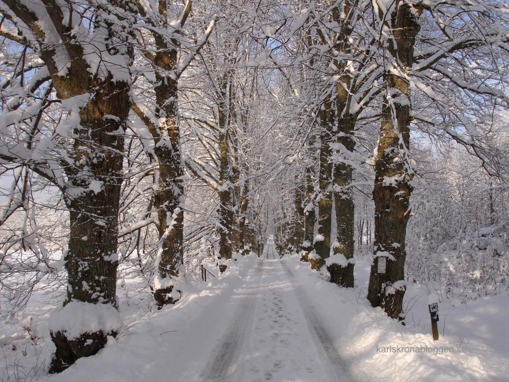 Allén i Bastasjö i vinterskrud