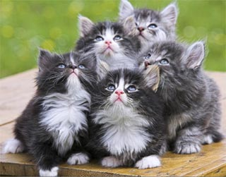 när får kattungar ögon