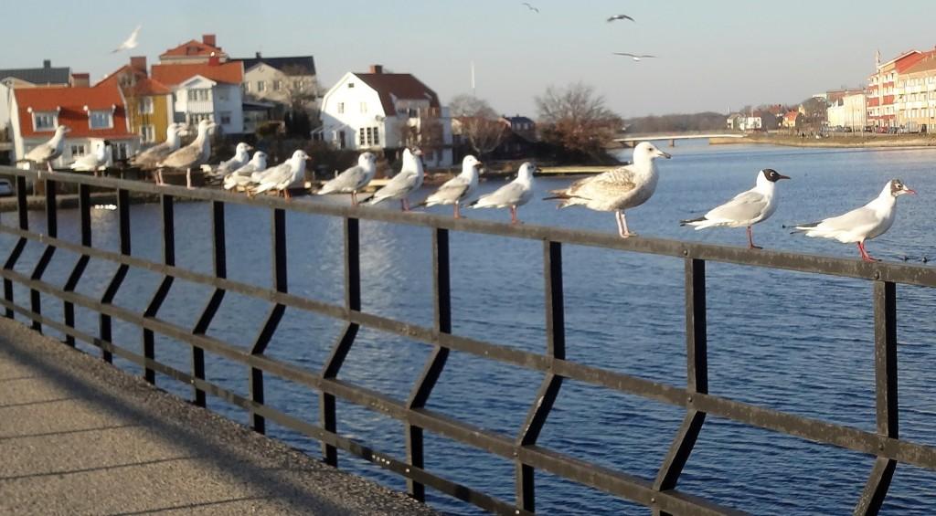 Karlskrona Fågelmatarförening