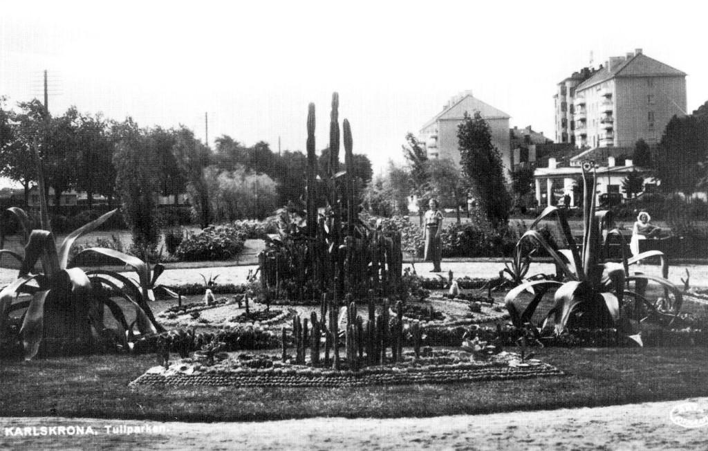 Kaktusgrupp i Tullparken