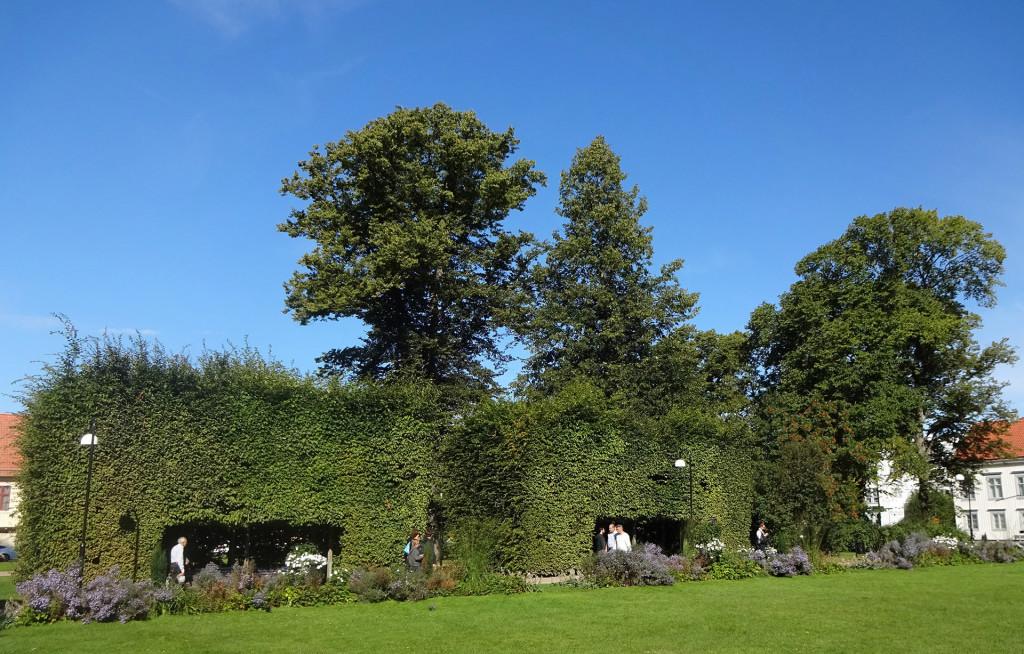 Samtliga bersåer i Hoglands park kommer att plockas bort för att öka tryggheten i parken